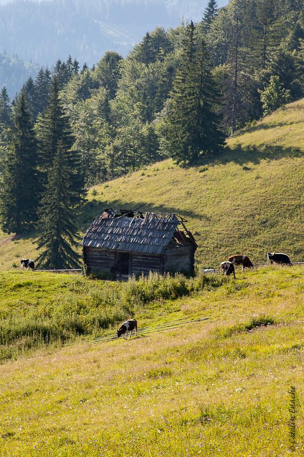 Calator prin Bucovina – peisaje de vara