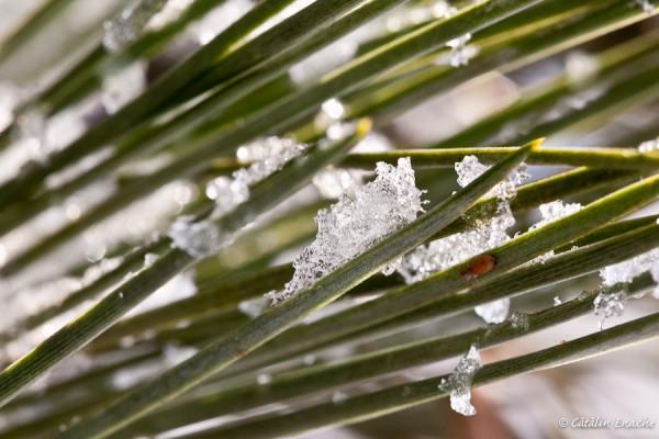 Povestiri de iarna - inghet si dezghet | Fotografie de natura | Catalin Enache
