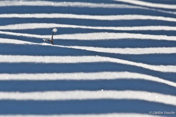 Calator prin Bucovina – Iarna la Moldovita (II) | Fotografie de peisaj si portret | Catalin Enache