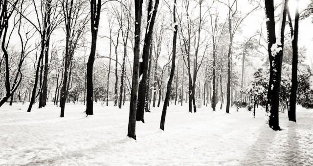 Povestiri de iarna - de prin parcuri adunate