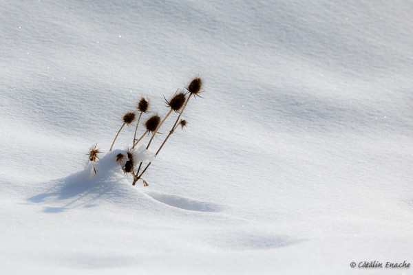 Sfarsit de iarna la Cozia | Fotografie de peisaj si arhitectura | Catalin Enache