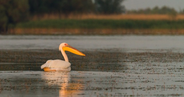In Delta Dunarii - dupa pasari (I)