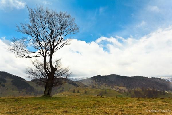 Inceput de primavara la munte - flori si peisaje