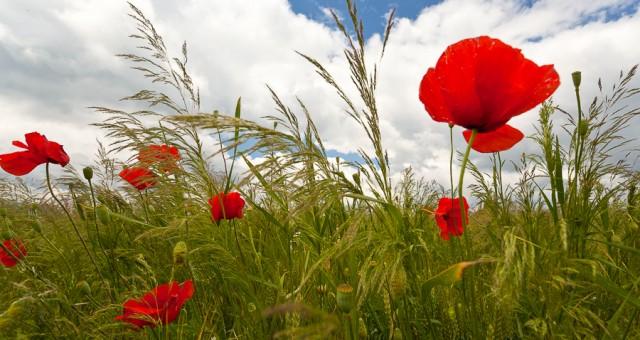 Lucruri marunte de vara